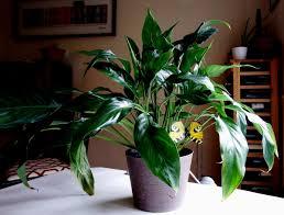 easy houseplants for busy families u003e joy makin u0027 mamas