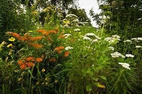 bird friendly native plants audubon the benefits of native plants wildcat glades audubon center