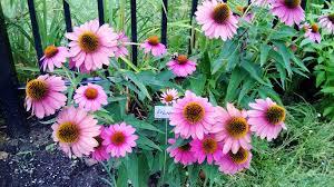 Westwood Flower Garden - westwood community garden civic garden center
