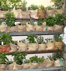 vegetable garden ideas u2013 home design and decorating