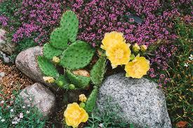 each little world my garden odyssey no room to grow
