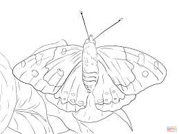 kamehameha butterfly coloring page free printable coloring pages