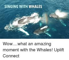 Whaling Meme - singing with whales wowwhat an amazing moment with the whales