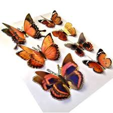 3d butterfly stickers ministrygallery com