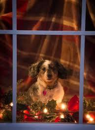 33 best dog christmas cards ideas images on pinterest christmas