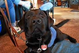 Leader Dogs For The Blind Rochester Michigan Pups On Tap Leader Dogs For The Blind Puppy Raisers Share Their
