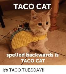 Tuesday Meme - taco cat spelled backwards is taco cat it s taco tuesday meme on