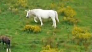 unicorn sighting caught on camera youtube