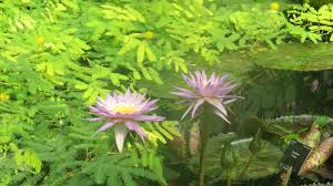native plants for butterfly gardening benton soil u0026 water london plants bug woman u2013 adventures in london page 13