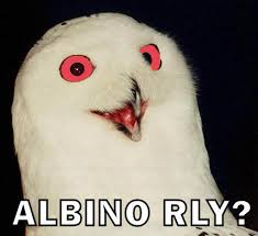 Albino Meme - albino rly o rly know your meme