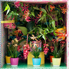 may 2016 blooming tropical plants houseplants of the month