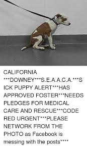Sick Puppy Meme - california downey seaaca sick puppy alert has approved