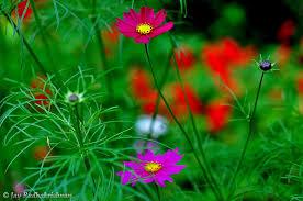 ooty flowers botanical garden ooty ooty flowers botanic u2026 flickr