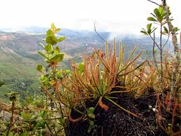 brazil native plants meet some amazing animals and plants that are new to science la