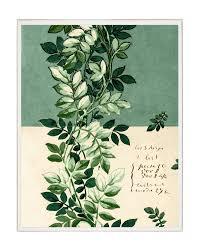 botanical sts rising vine botanical sketch mcgee co
