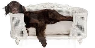 sofa fã r hunde hundsgemütlich sofas für hunde poochy klüngelkram