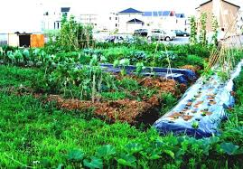Small Vegetable Garden Ideas Easy Vegetable Garden Design Ideas With Small Vegetable Garden And