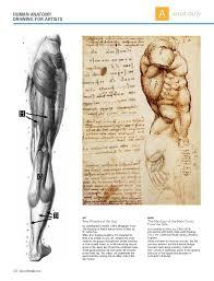 Leonardo Da Vinci Human Anatomy Drawings Drawing Anatomy