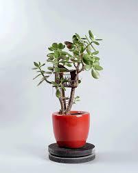 miniature tree huts for house plants tree hut miniature trees