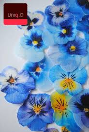 edible blue flowers buy 55 get 5 free blue edible flowers edible flowers wedding