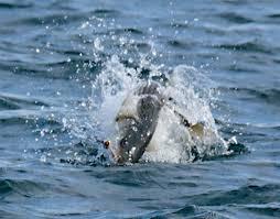 Blue Water On The Ocean Cape Cod - the cape cod striper scene on the water