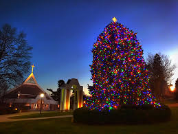 fairfield cus gets merry and bright with annual tree
