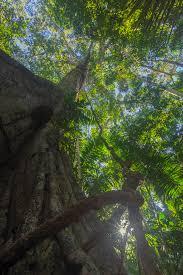 amazon rainforest native plants peru u0027s lago soledad amazon lodge