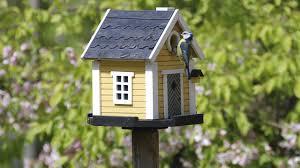 birdcam youtube