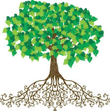 tree with roots illustration pretty and flourishing