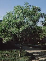 18 california winter garden ufei selectree a tree selection