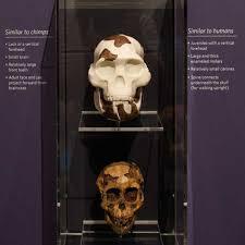 skulls california academy of sciences