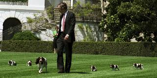 house dogs all the presidents u0027 white house dogs album on imgur