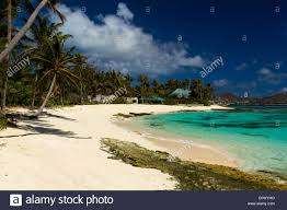 tranquil caribbean beach fringed with palm trees vivid turquoise