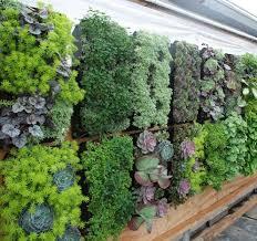 Vertical Garden Adalah - jual kantung geotextile vertical garden verticulture jual
