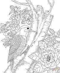 cactus wren and saguaro blossom arizona state bird and flower