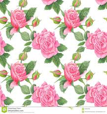 Shabby Chic Rose by Shabby Chic Watercolor Pattern Stock Illustration Image 56893482