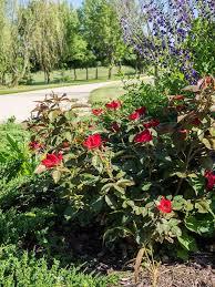 garden photography garden org