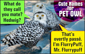 presenting some really cute and adorable names for your pet owl