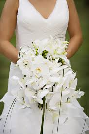 white orchids besides this since these flowers are available all year they