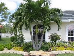 tree palm paradise palms nc