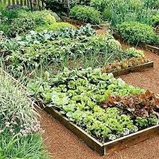 Fruit Garden Layout Veg Garden Best Garden Design Images On Vegetable Garden Herb