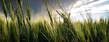 montana agriculture business association montana