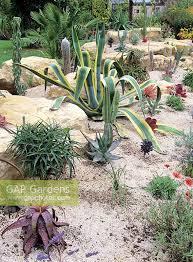 Tropical Rock Garden Gap Gardens Succulents And Cacti In Gravel Rock Garden Sub