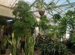 beautiful indoor house plants u2013 plants and planters