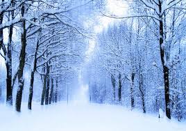 the magic of nature 35 dazzling snowy tree photos