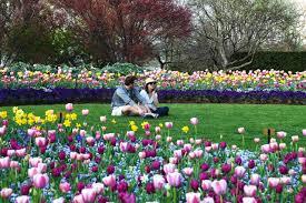 Dallas Arboretum And Botanical Garden Dallas Arboretum Presents Dallas Blooms Peace And Flower