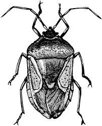bugs clipart big black pencil and in color bugs clipart big black