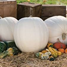 13 best squash and melon seeds owned images on