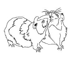 Dessin de coloriage Hamster à imprimer  CP13222