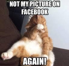 Cute Cat Memes - 10 funny cat memes 2015 cute cat pictures photos pics